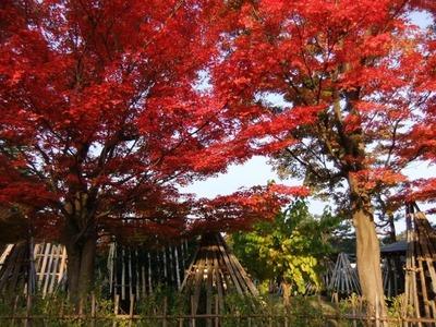 美しい秋のお写真11月9日