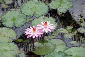 台湾のお花