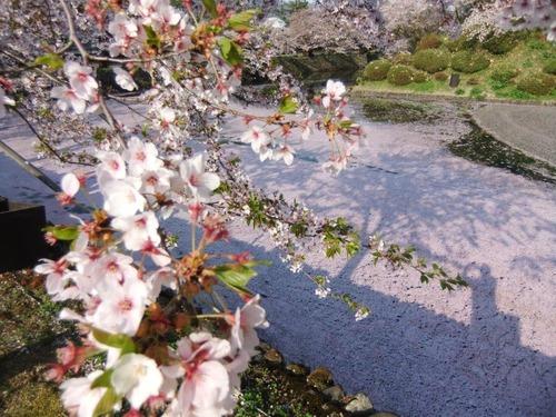 2花の絨毯
