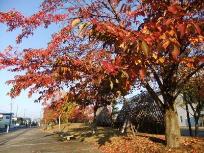 米沢の秋2