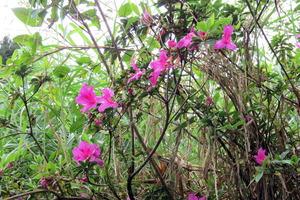 台湾のお花3