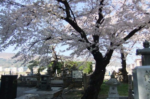 2016_04190020林泉寺の桜6