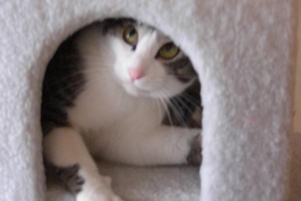 猫 (2)