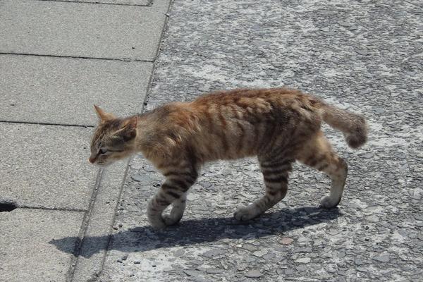 佐柳島、猫 (50)