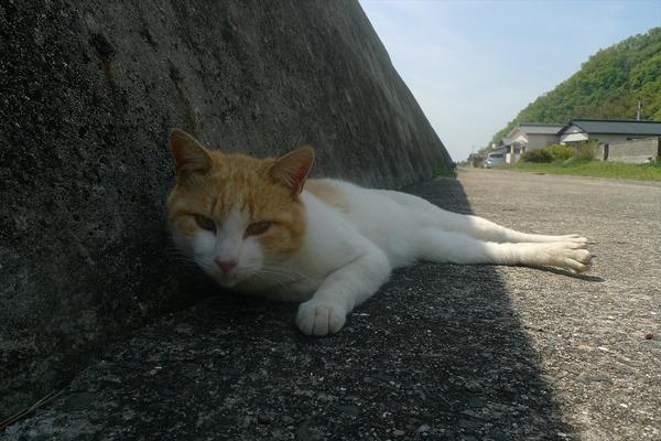 佐柳島、猫 (31)