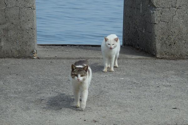佐柳島、猫 (78)