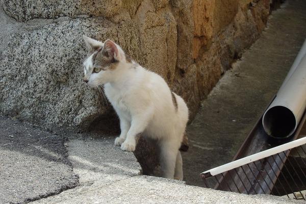 佐柳島、猫 (47)