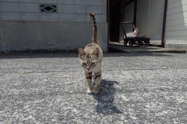 佐柳島、猫 (45)