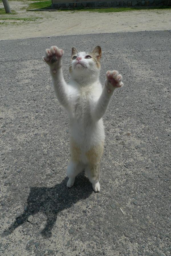 佐柳島、猫 (66)