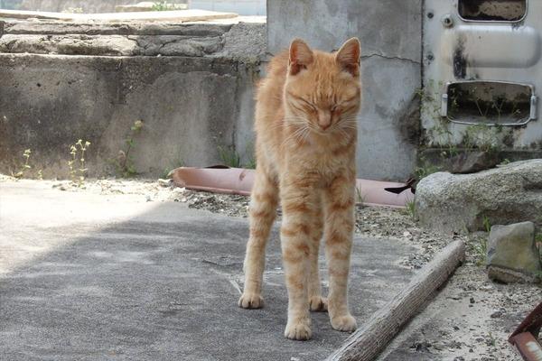 佐柳島、猫 (62)