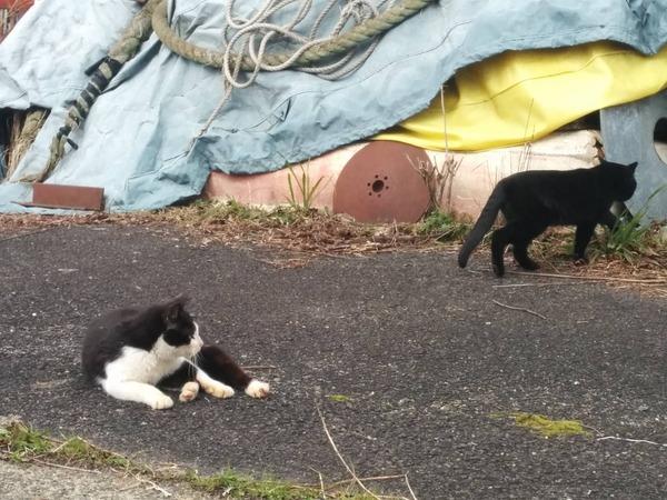沖島、猫3