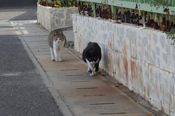 佐柳島、猫 (77)