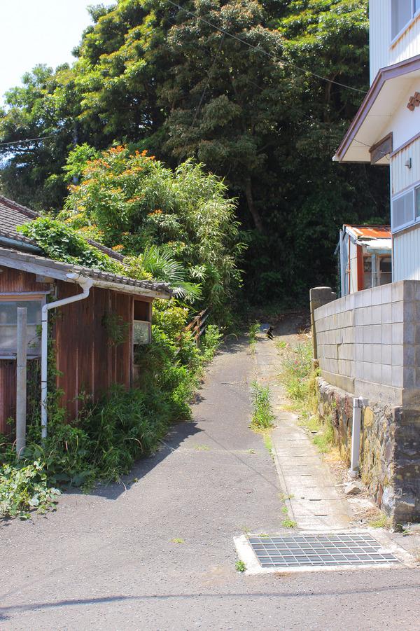 田代島 (51)