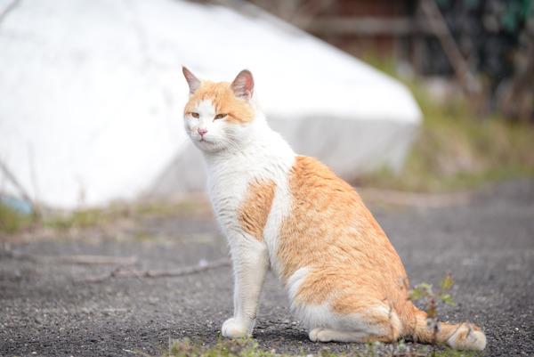 猫 (27)