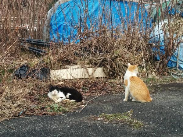 沖島、猫2