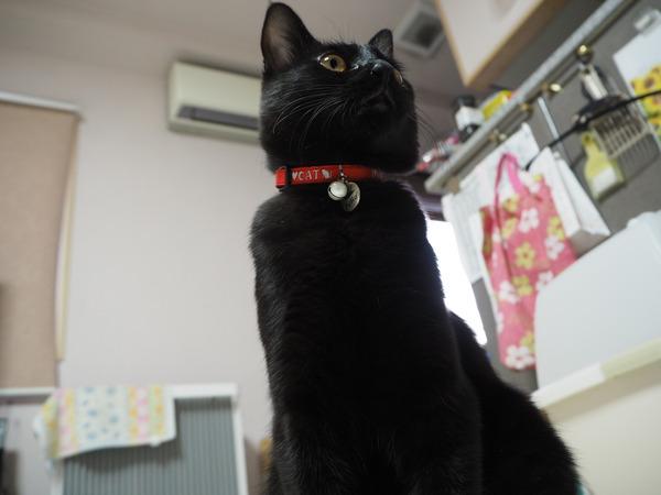 猫 (81)