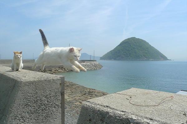 佐柳島、猫 (9)
