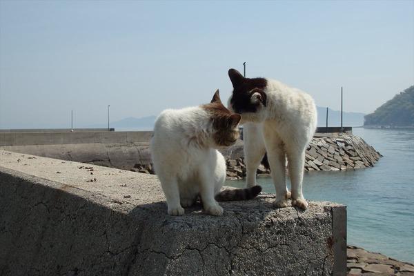佐柳島、猫 (22)