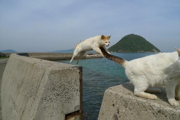 佐柳島、猫 (13)