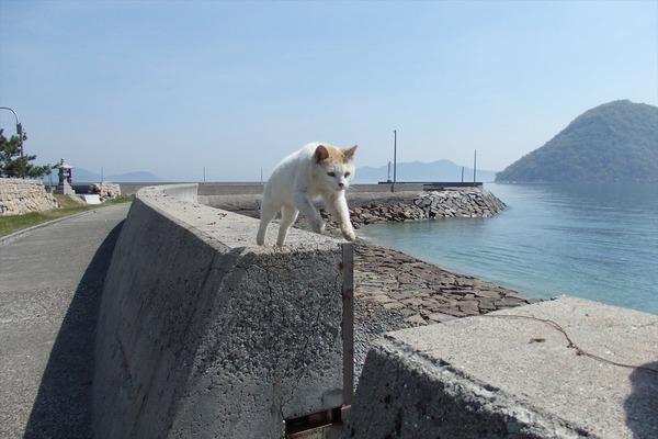 佐柳島、猫 (19)