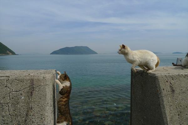 佐柳島、猫 (10)