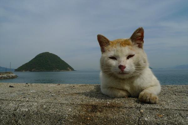 佐柳島、猫 (25)