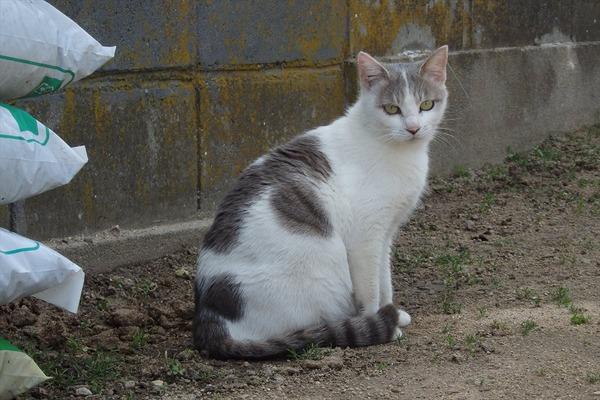 佐柳島、猫 (40)