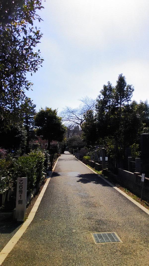 谷中霊園2
