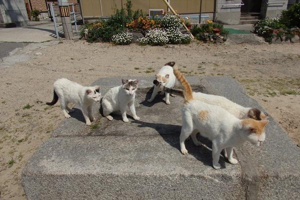 佐柳島、猫 (2)