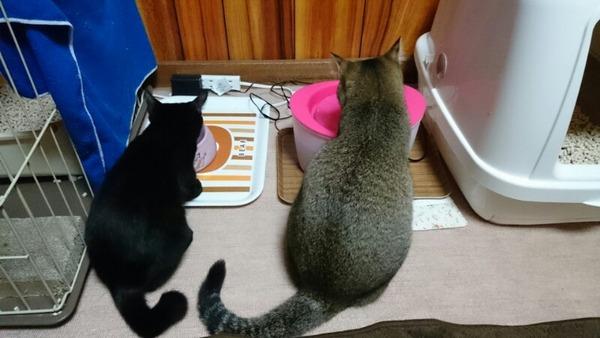 猫 (11)