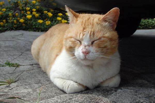 佐柳島、猫 (81)