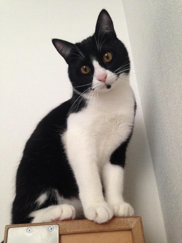 猫 (21)