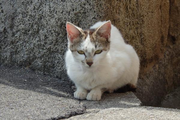 佐柳島、猫 (48)