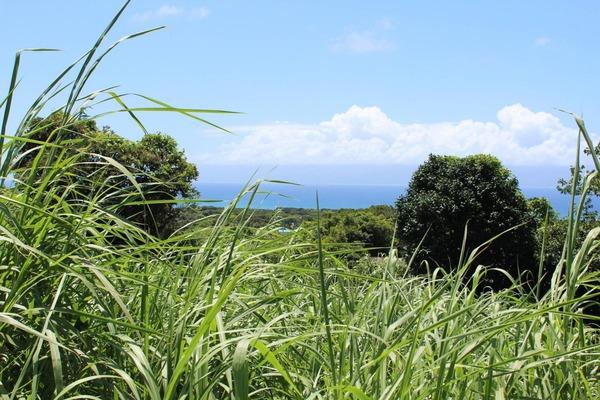 種子島10