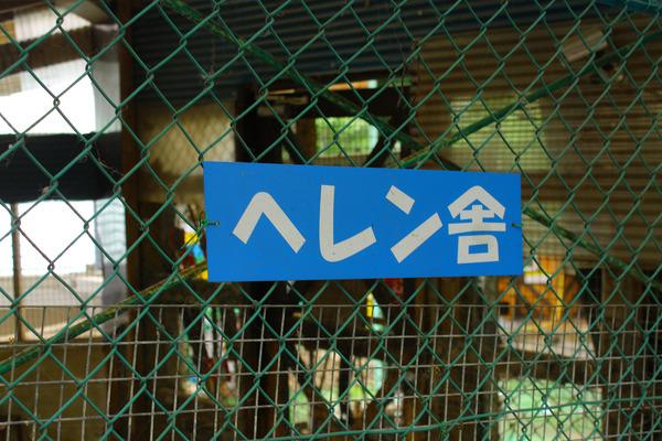 キツネ村 (7)