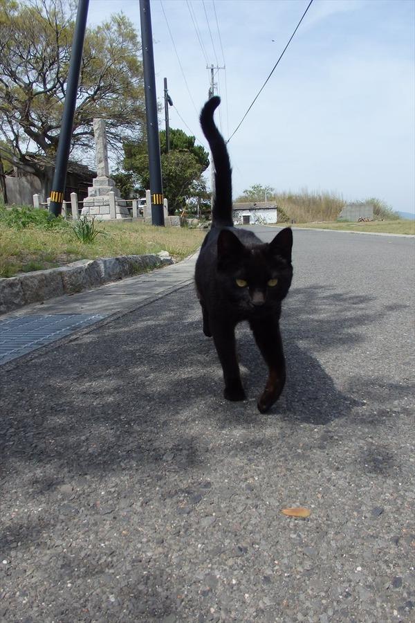 佐柳島、猫 (56)