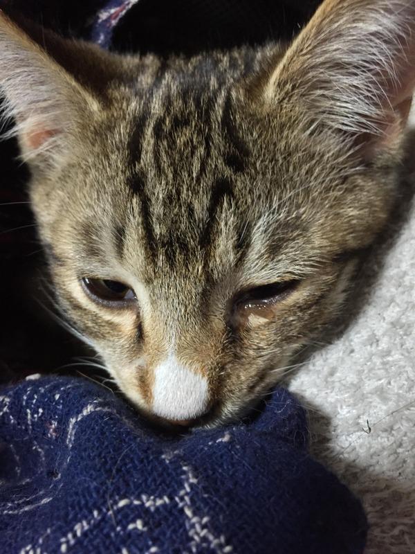 猫 (17)