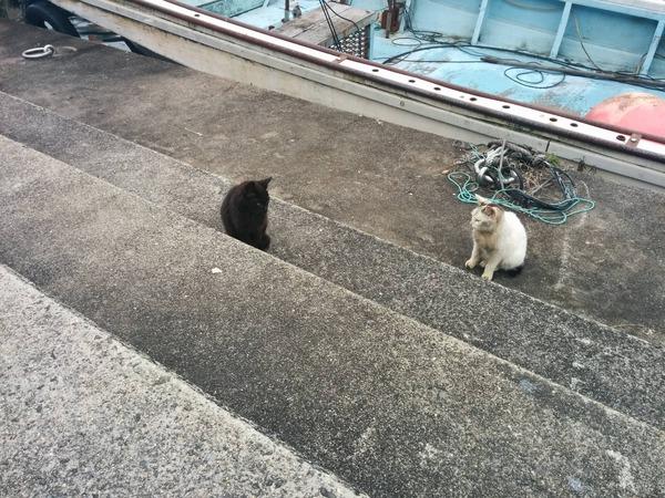 沖島、猫5