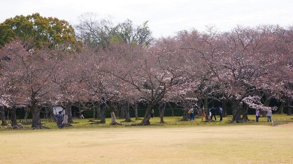 岡山後楽園10