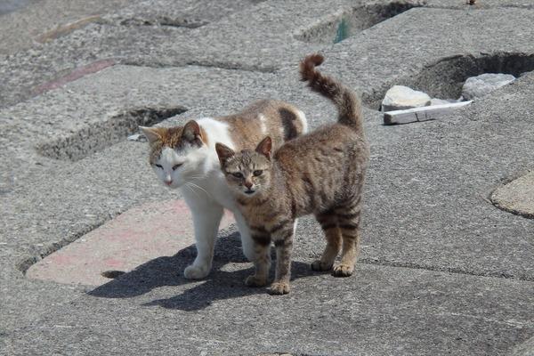 佐柳島、猫 (52)
