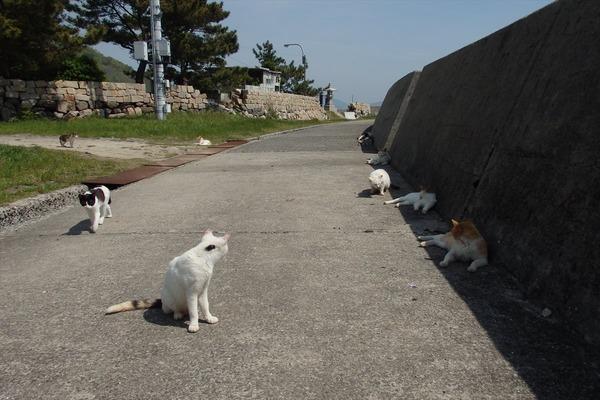 佐柳島、猫 (30)