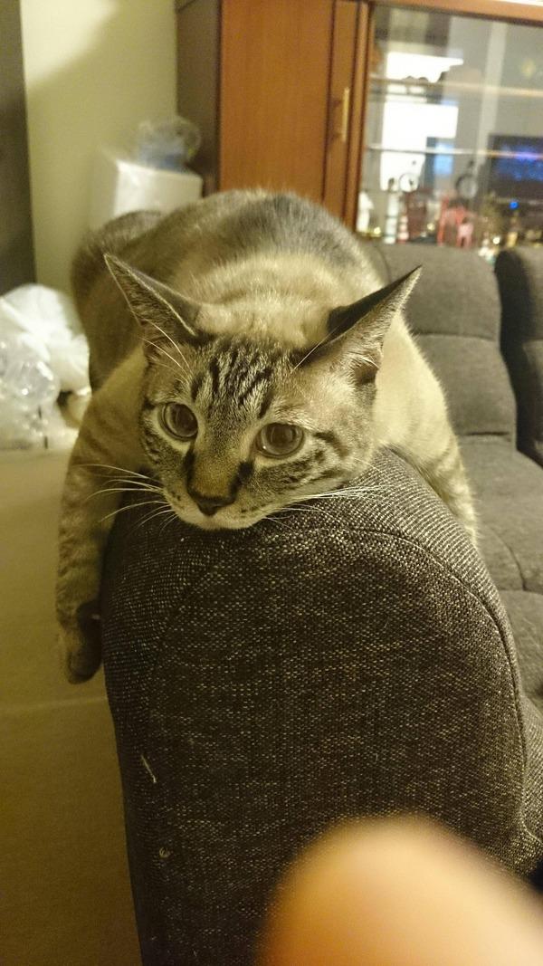 猫 (13)