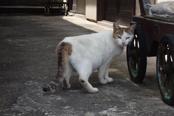 佐柳島、猫 (41)