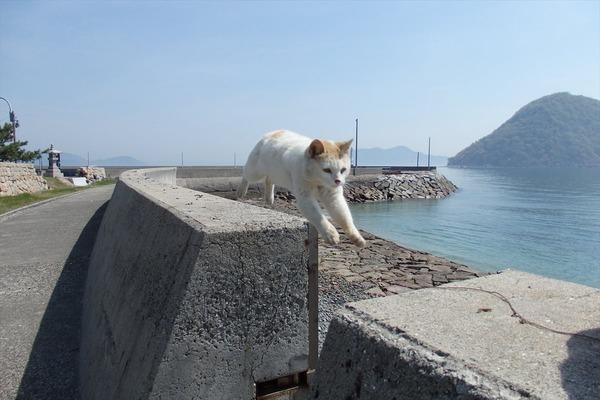 佐柳島、猫 (20)