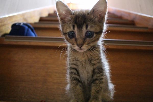猫 (10)