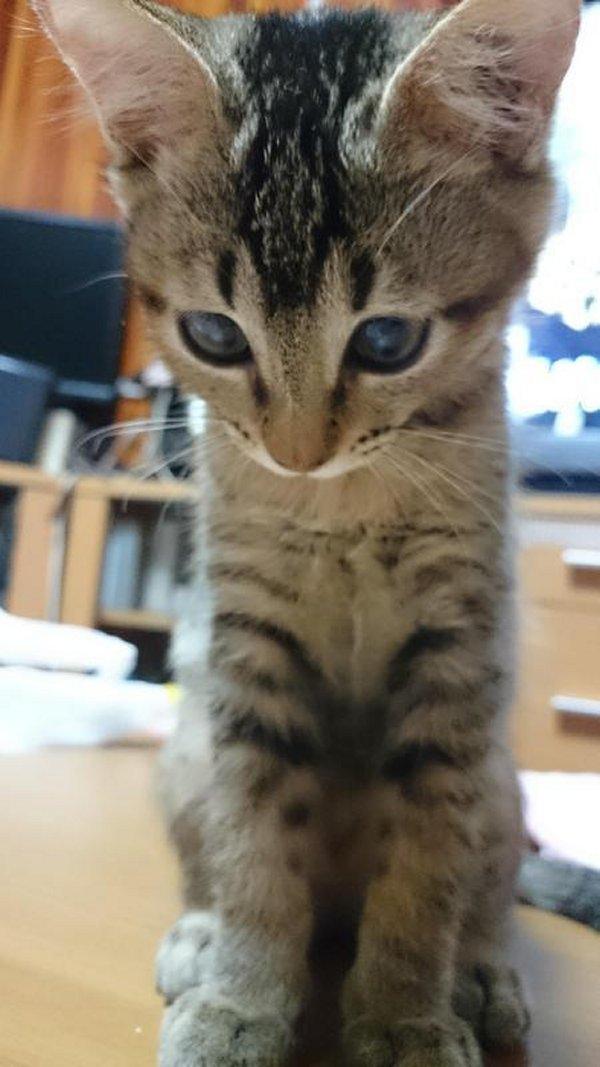 猫 (4)
