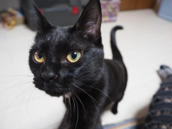 猫 (65)