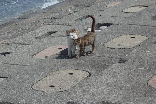 佐柳島、猫 (51)