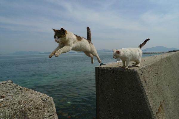 佐柳島、猫 (12)