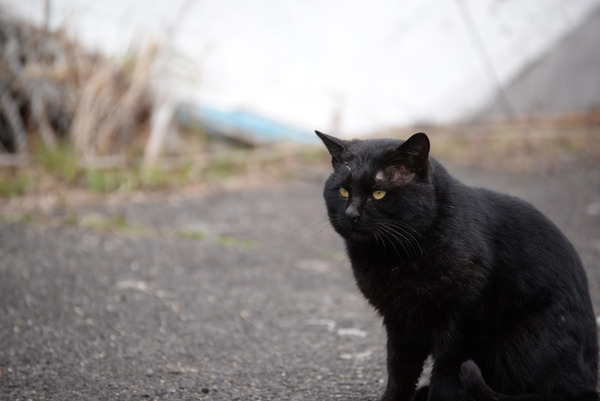 猫 (29)